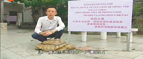 ■管制行動進行期間,被其中一戶飼養的大龜在戶外四處走。有線新聞截圖