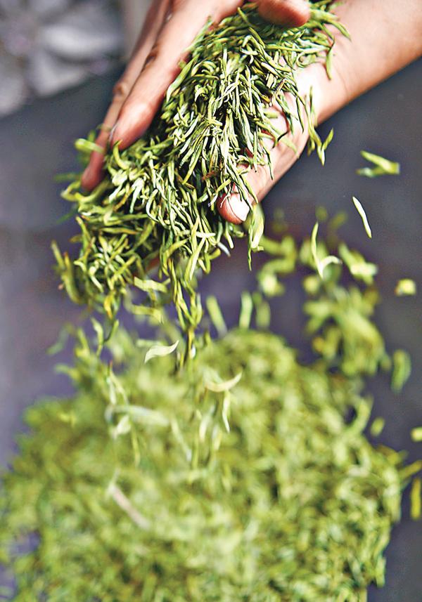 ■中國最先栽培茶葉,並將栽培技術傳向世界。資料圖片