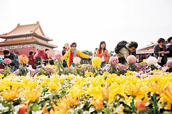 ■今年國慶黃金周,3萬多盆精品菊花為故宮添彩,遊人絡繹不絕。 資料圖片