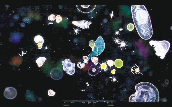■水中的浮游生物進行光合作用,可增加氧氣。   網上圖片