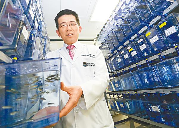■梁如鴻指利用斑馬魚做實驗成本低,但效果理想。莫雪芝 攝