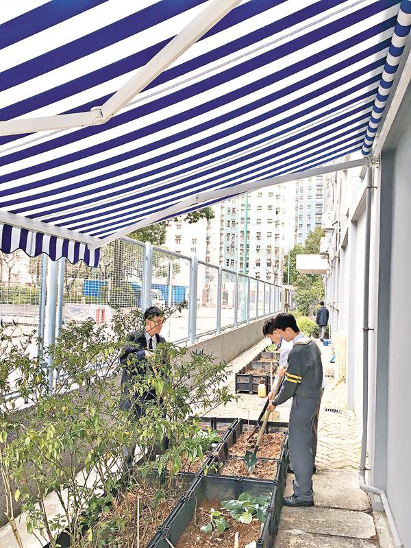 ■同學於「太陽雨傘」下照顧植物。 校方供圖