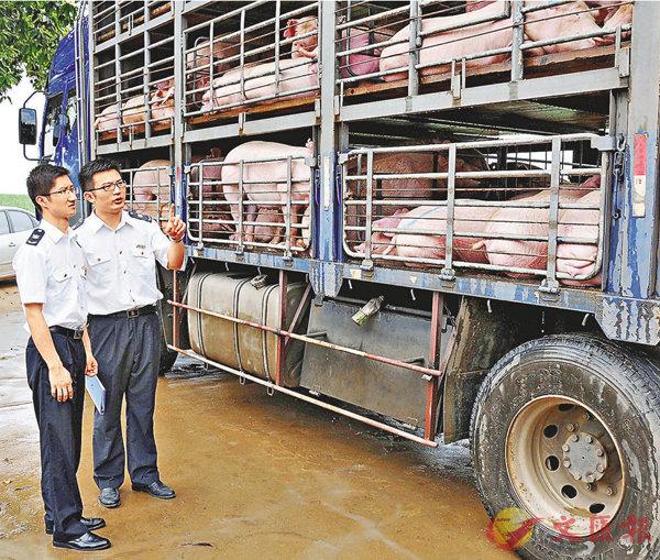 ■廣西南寧檢驗檢疫局工作人員現場檢疫監裝供港活豬。   資料圖片