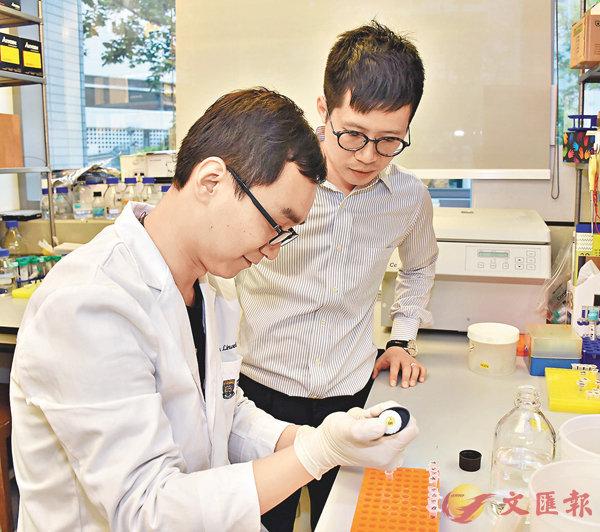 ■研究團隊驗證USP7為重要的RNF169調節器,以調控「DNA損傷反應」。港大醫學院供圖