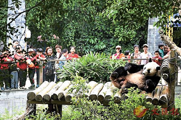 ■「秋濱」萌態十足,吸引眾多遊客駐足觀看、拍照。記者郭若溪  攝