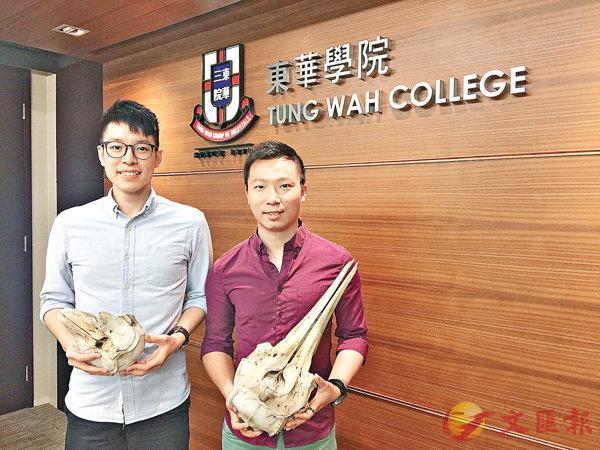 ■袁晞朗(左)手持江豚頭骨標本,葛展榮(右)手持中華白海豚頭骨標本。 柴婧  攝