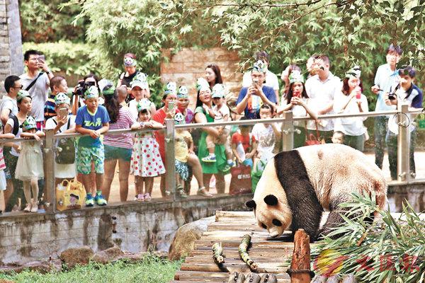 ■眾多粉絲在為熊貓「圓舟」熱烈慶祝7歲生日。 香港文匯報記者郭若溪 攝