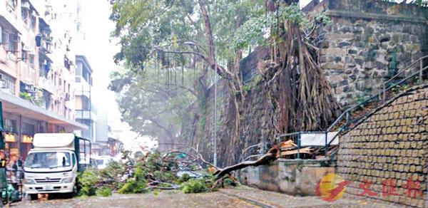■石牆大樹樹幹折斷橫~路中,壓中路旁車輛。 網上圖片