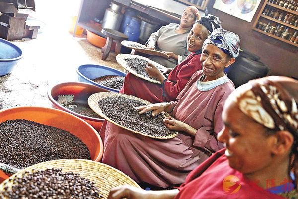 ■近年不少咖啡公司引入公平貿易理念。圖為埃塞俄比亞婦女們正在篩選咖啡豆。 資料圖片