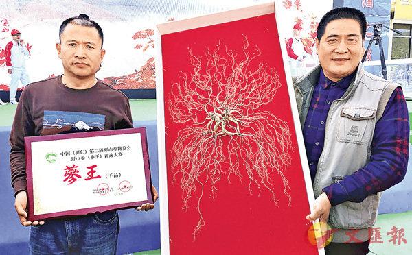 ■「太陽山參」獲評「參王」。香港文匯報記者于珈琳 攝