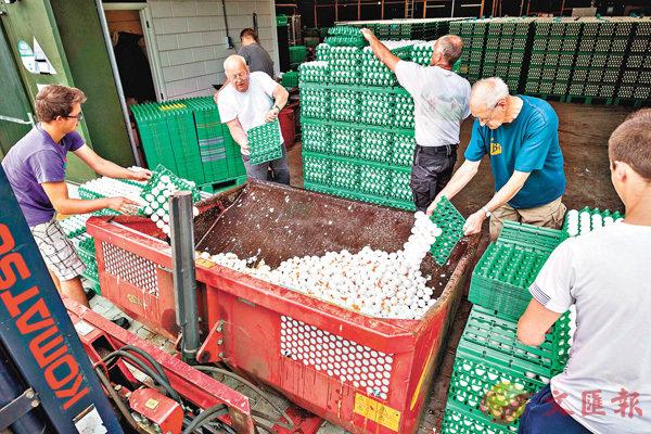 ■荷蘭的雞農銷毀問題雞蛋。 資料圖片