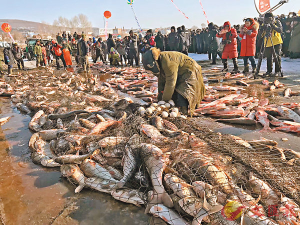 ■冬捕節開幕式一網共捕到鮮魚約18萬斤,其中最重的頭魚重達40斤。香港文匯報記者于海江 攝