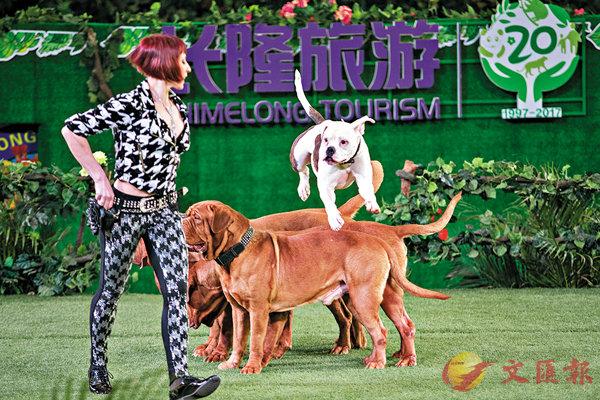 ■烏克蘭名犬團來廣州賀新春。 香港文匯報記者胡若璋 攝