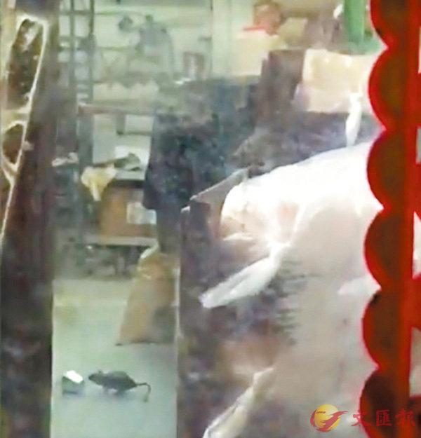 ■有網民拍得有老鼠在麵包店內橫行。 「沙田友」圖片