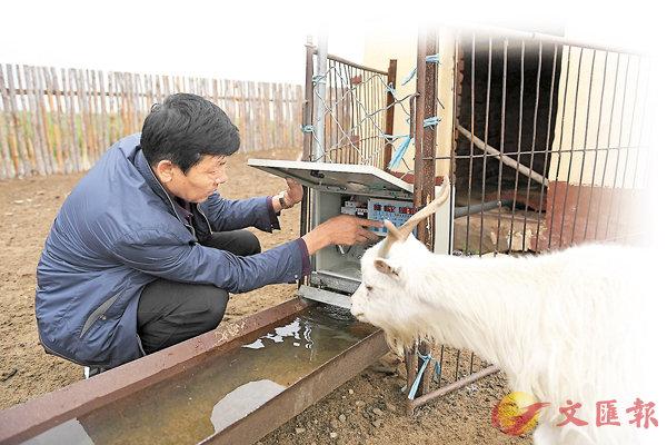 ■自動飲水槽、太陽能集中採暖供熱系統、智能化門窗控制系統等,正在草原上推廣。圖為內蒙古牧民在查看牛羊自動飲水裝置。 資料圖片