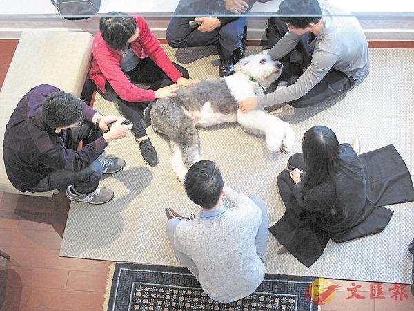 ■港大圖書館早前推出駐館治療犬試驗計劃,反應踴躍。 港大供圖