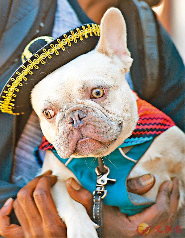 ■英語中有不少關於狗的慣用語。 資料圖片
