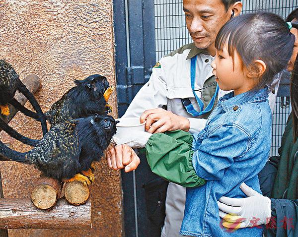 ■動物訓練員建議市民餵飼時不要太緊張,依照訓練員的指示餵飼便可。 香港文匯報記者劉國權 攝