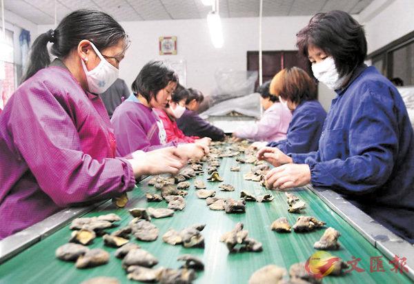 ■西峽香菇是河南省第一大出口農產品。馮雷 攝