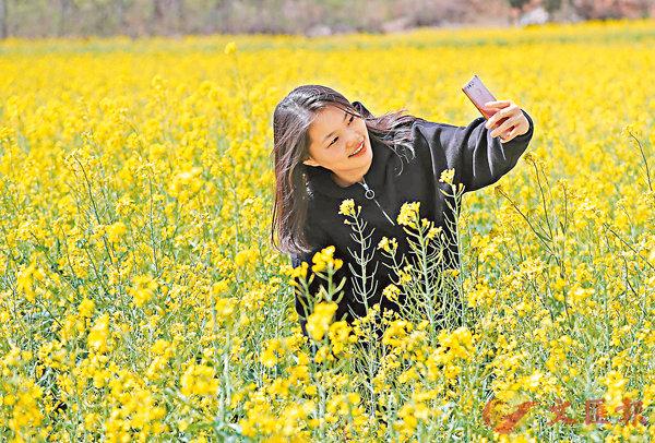 ■在河南省鞏義市水道口村,油菜花鋪滿大乘山,不少遊客駐足拍照。 香港文匯報河南傳真