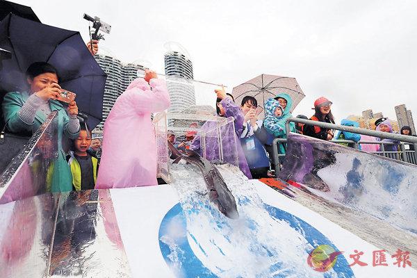 ■2018年長江三峽中華鱘放流活動昨日在湖北宜昌舉行。中新社