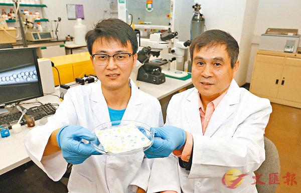 王立秋(右)與朱平安(左)展示他們創新發明的防水防油物料。港大供圖