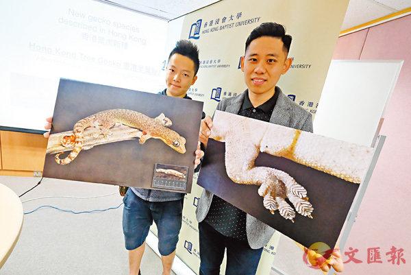 ■宋亦希(右)及其研究團隊證實一種香港獨有的壁虎品種,並命名為「香港半葉趾虎」。 香港文匯報記者梁祖彝  攝