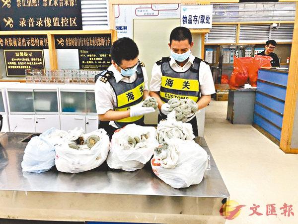內地皇崗海關最近接連查獲5宗旅客攜銀冠玉入境案件。 網上圖片