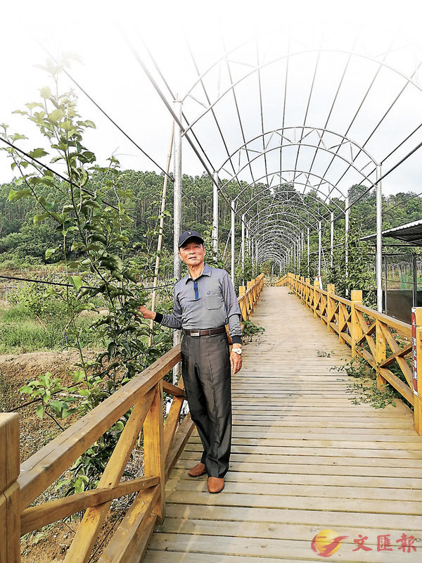 ■ 莊久毅營造的獨具台灣特色的「蛇瓜長廊」將於今年9月掛滿瓜果,變成天然綠色長廊。