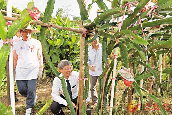 ■羅致光參觀退休長者義工種植的農作物。