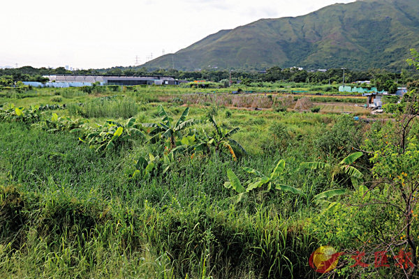 ■新界閒置農地。   香港文匯報記者劉友光 攝