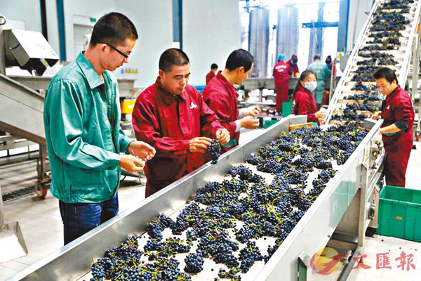 ■寧夏賀蘭山東麓葡萄酒產區酒莊生產線。 網上圖片