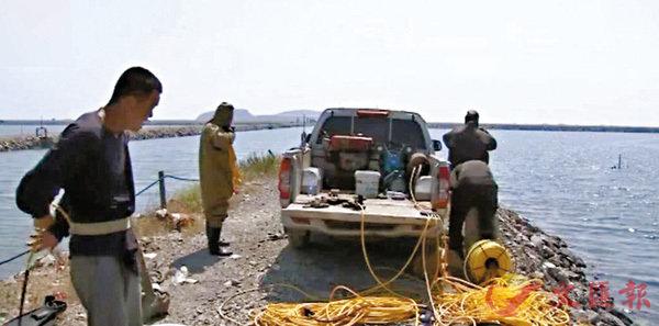 ■專家提示養殖戶,最好的拯救措施就是等有潮的時候積極換水。圖為養殖戶在海邊搶救海參。 網上圖片