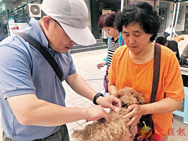 ■濟南市民送家中寵物犬注射疫苗。本報山東傳真