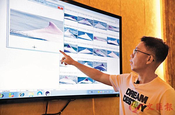 ■粵港澳三地正在籌建中華白海豚粵港澳保護聯盟,共同推動中華白海豚保護事業發展。圖為工程師陳希在介紹數據庫中記錄的白海豚背鰭特點。   新華社