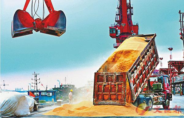 ■為應對進口美大豆減少造成的缺口,中國正積極拓展大豆進口來源。圖為江蘇南通一港口正在卸貨從巴西進口的大豆產品。資料圖片