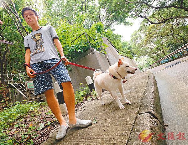 ■ 陳先生習慣每日到獅子山公園遛狗。 香港文匯報記者梁祖彝  攝