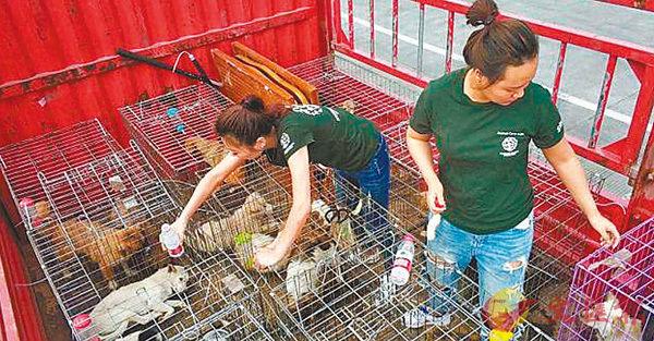 ■動物保護人士在廣西玉林。