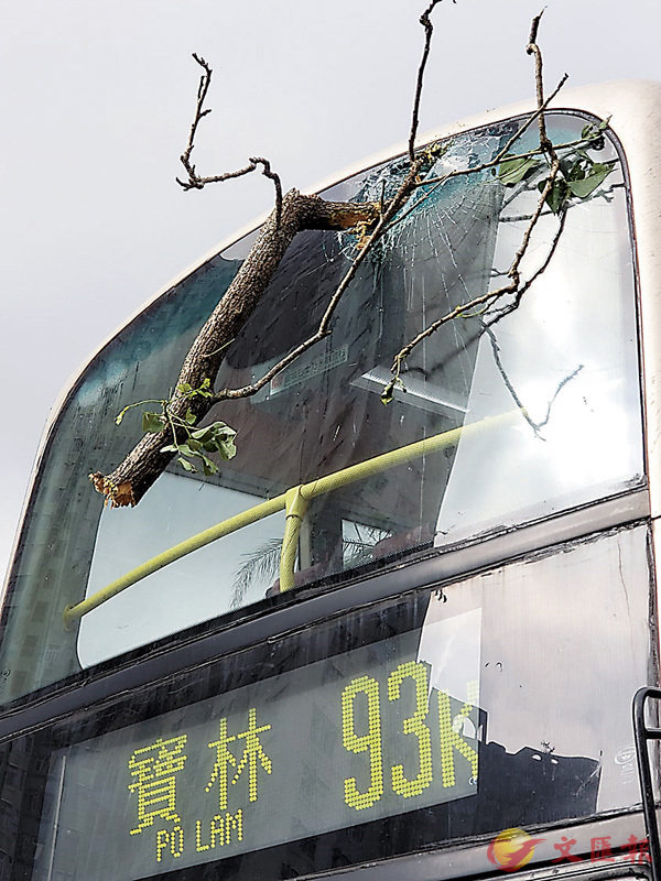■有樹椏插入巴士擋風玻璃。網上圖片