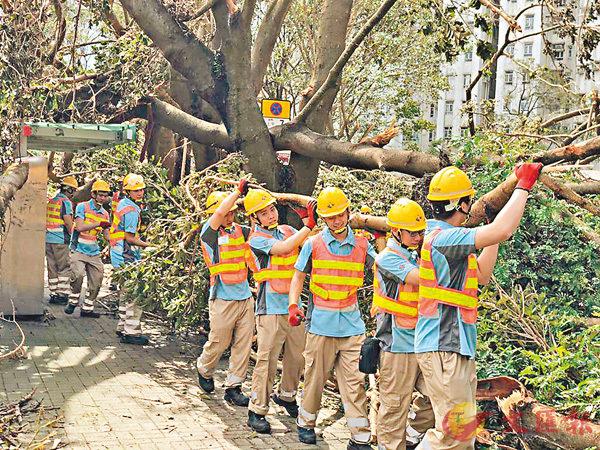 ■香港建造學院上水院校的學生為天平山村居民清理塌樹。 網上圖片