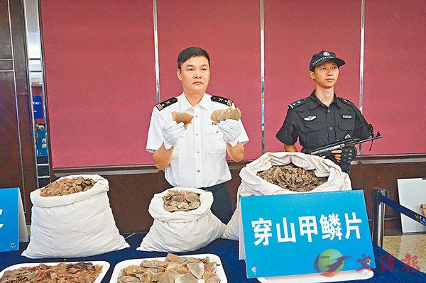 ■广州海关展示查扣的部分穿山甲鳞片。 香港文汇报记者敖敏辉摄