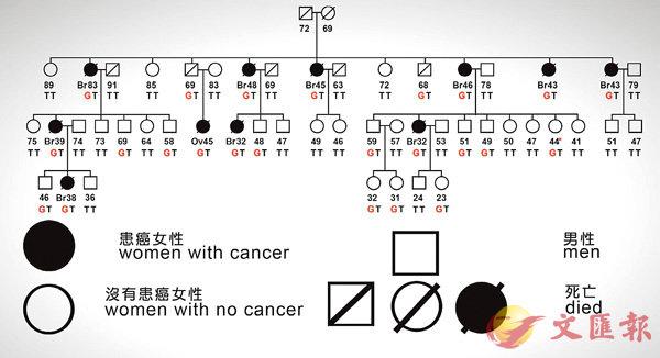 ■瑪莉-克萊爾.金分析家庭患乳癌情況圖表。主辦方供圖