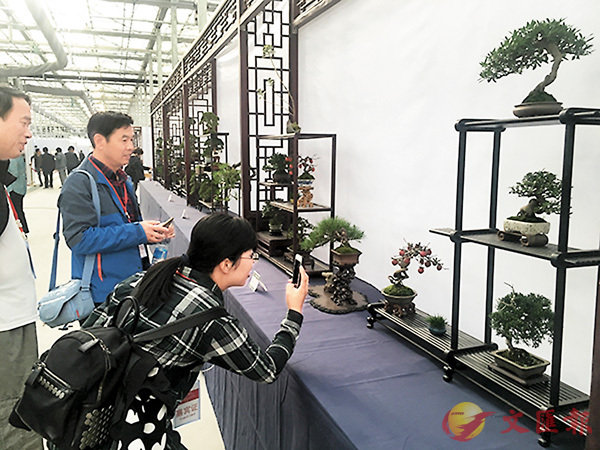 ■87件中華七大流派盆景集中展出,讓年輕觀眾也驚奇不已。網上圖片