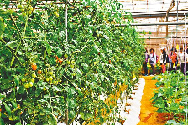 ■有機食品是指沒有用上農藥或化肥的食品。 資料圖片