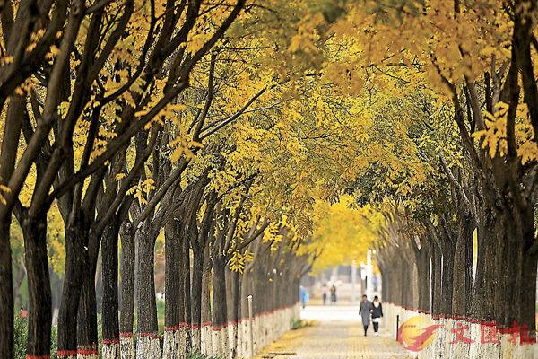 ■寧夏銀川市鳳凰公園秋景
