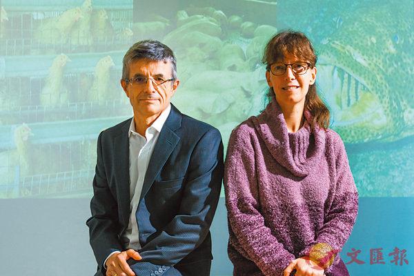 ■Dirk Pfeiffer(左)和沈藹莉領導的研究,有助改善禽畜及魚類的健康及生產方法。  城大供圖