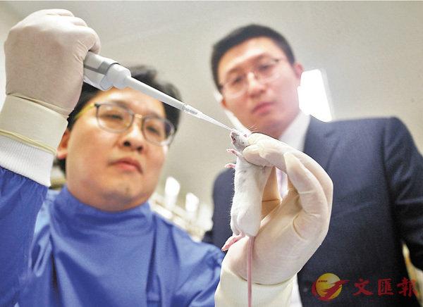 ■港大微生物學系團隊透過小鼠實驗證實,該藥物最少能治療7種病毒感染。香港文匯報記者莫雪芝  攝