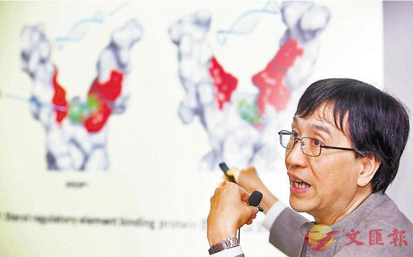 ■袁國勇表示,AM580可阻止病毒大量複製。香港文匯報記者莫雪芝  攝