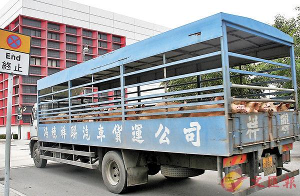 荃灣屠房: 豬年頭3天 或無鮮豬食