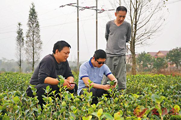 ■謝昌庭(中)為買到優質油茶苗四處考察調研。 受訪者供圖